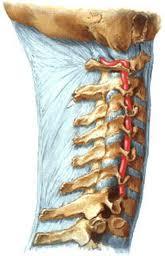 Синдром позвоночной артерии СПА (ход позвоночной артерии)