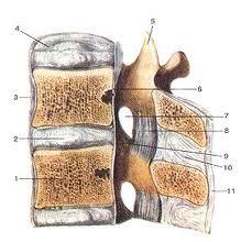 Es tut der Rücken auf dem Gebiet den rechte Schulterblatt weh